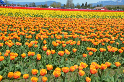 DSC 6130 